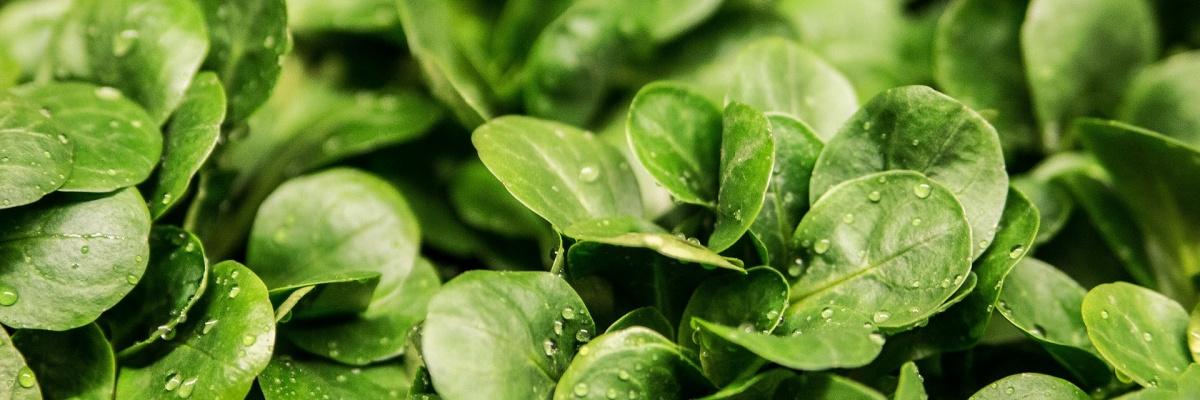 Kyselina listová (vitamín B9) pôsobí preventívne na vznik nádorových ochorení.