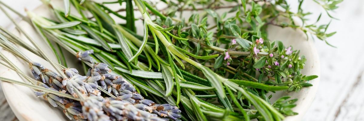 Ktorí bylinkoví pomocníci sú najlepší na boľavý žalúdok a problémy s trávením?